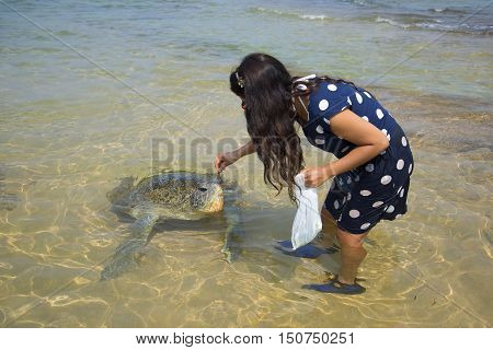 HIKKADUWA, SRI LANKA - MARCH 23, 2015: Girl feeds algae sea turtle. Sri Lanka.