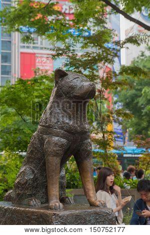 TOKYO  , JAPAN - MAY 1 , 2016 : Hachiko dog statue at Shibuya station.  travel shibuya shopping centers, Tokyo, Japan. MAY 1 2016.