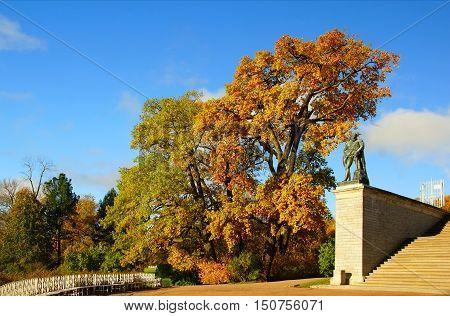 Autumn morning in the Catherine park in Tsarskoye Selo