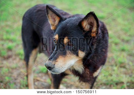 Yard Dog Looks