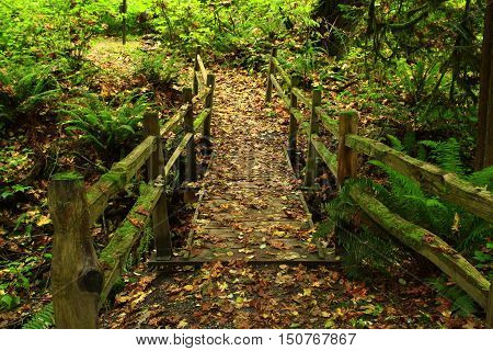 a picture of an exterior Pacific Northwest forest hiking trail with  a wood bridge in fall
