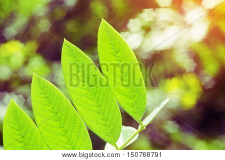 Vintage nature background, Green leaf with light bokeh nature blur background, Spring nature, Spring background