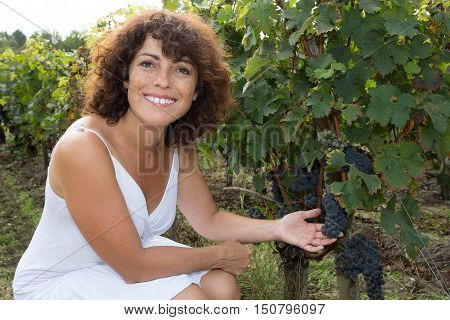 Woman Winemaker With Grapes In A Vineyard