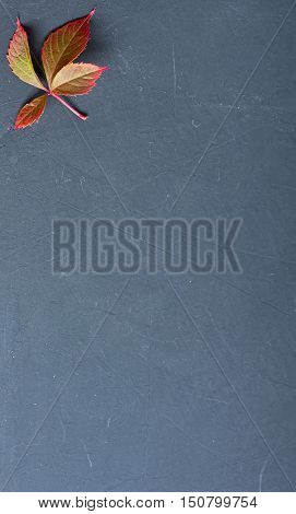 grape leaf in shell on blackboard with copy space