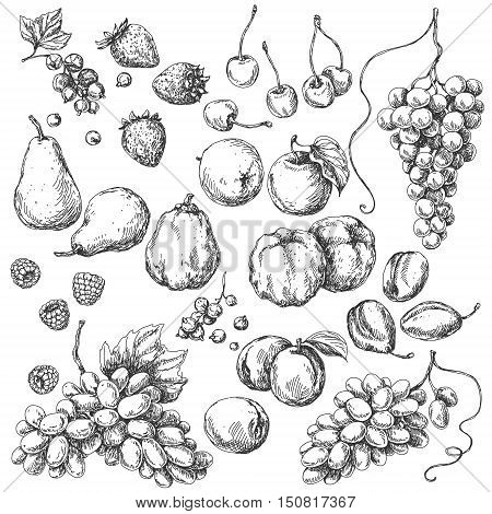 Monochrome fruits set. Hand drawn sketch of apple pear grape quince plum apricot cherry and berries.