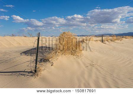 Abandoned Desert Fence