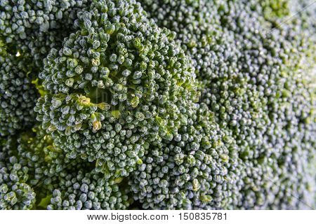 Single Brocoli Stem Top Bush Vegetable Fresh Cooking Raw Ingredient Isolated White Background Detail Closeup