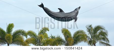 Dolphin Jumps In The Air