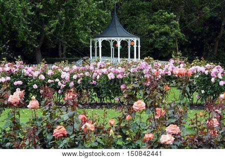 The Rose Garden of Palmerston North North Island New Zealand.