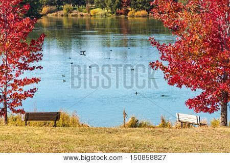 Autumn Park With Pond