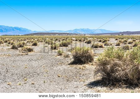View of bushes in Death Valley National Park, California