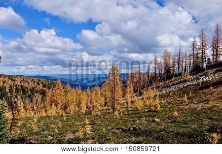 Fall colours on Frosty Mountain in Manning Provincial Park. Hope. British Columbia. Canada.