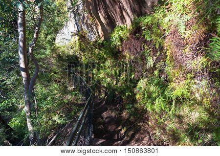 Walking Track In Mountain