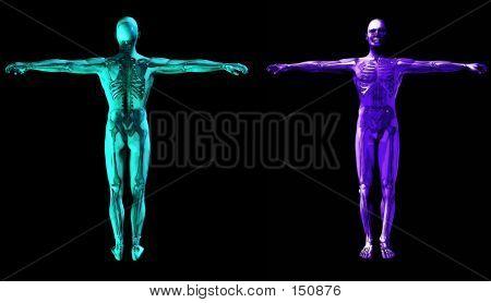 Medical Scan 6