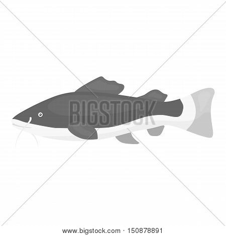 Phractocephalus hemioliopterus fish icon monochrome. Singe aquarium fish icon from the sea, ocean life monochrome.