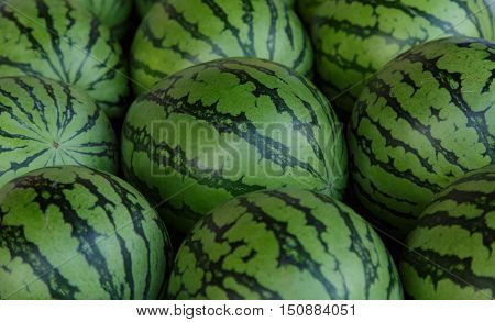 Photo of ripe water-melons with a striped peel