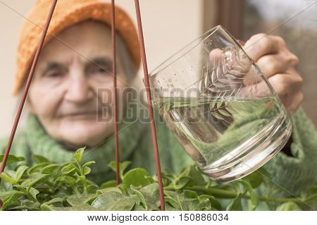 Elderly woman pouring water on flowers. Image with shallow depth of field.