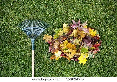 Rake on a wooden stick and Colored autumn foliage. Collecting grass clippings. Garden tools.
