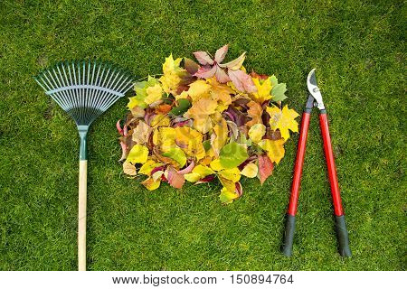 Rake on a wooden stick garden shears and Colored autumn foliage. Collecting grass clippings. Garden tools.
