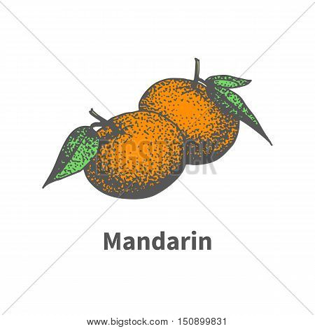 Vector illustration doodle sketch hand-drawn ripe juicy tangerine. Isolated on white background. The concept of harvesting. Vintage retro style. Two mandarin with leaves and branches.