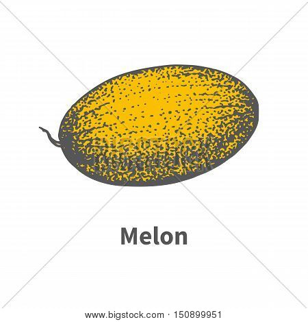 Vector illustration doodle sketch hand-drawn single juicy ripe yellow melon. Isolated on white background. The concept of harvesting. Vintage retro style.