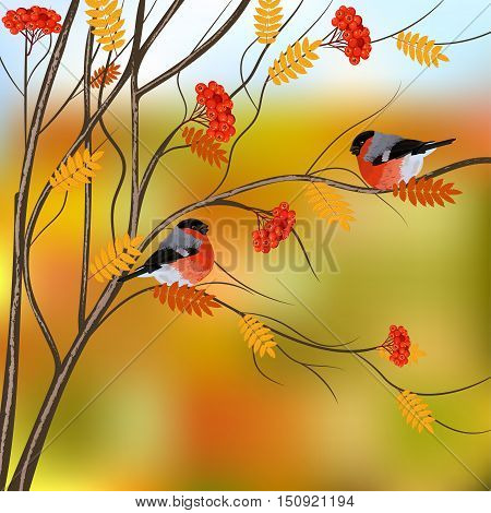 Autumn card with bullfinches sitting on branch of rowan, vector illustration.