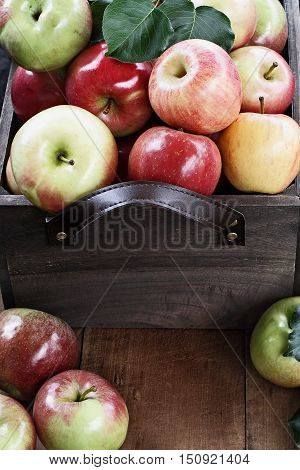 Freshly picked bushel of apples in an old vintage wooden crate with leather handles on a rustic wood table.