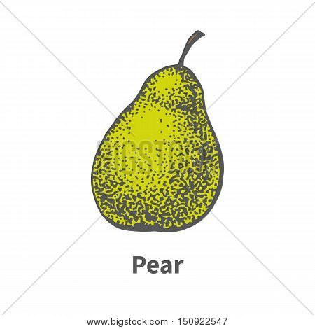 Vector illustration doodle sketch hand-drawn single ripe juicy green pear. Isolated on white background. The concept of harvesting. Vintage retro style.
