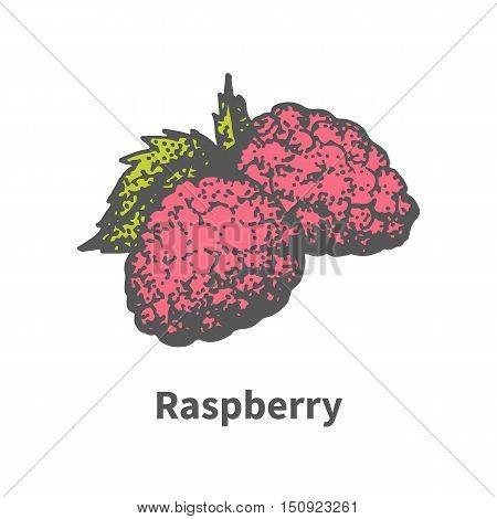 Vector illustration doodle sketch hand-drawn ripe juicy red raspberry with green leaf. Isolated on white background. The concept of harvesting. Vintage retro style.