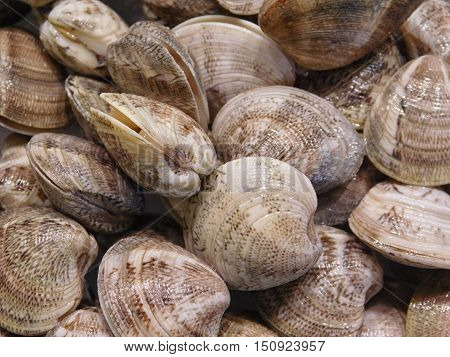 the texture of the clam shell to eat