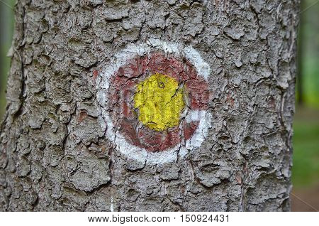 tourist signposting on the bark of a tree. South Bohemia