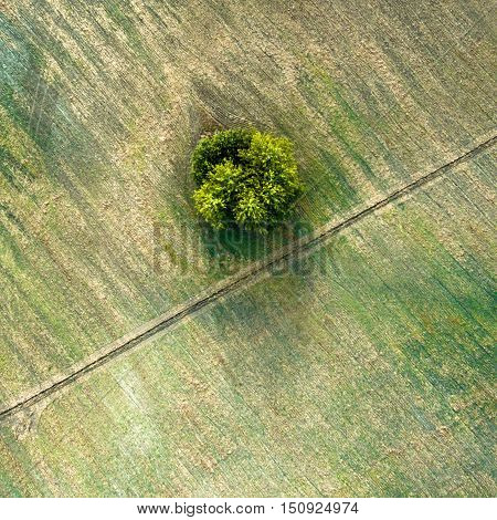 Aerial view over agricultural beveled fields, diagonal road and tree. Outdoor. Conceptual landscape photograph taken from the copter.