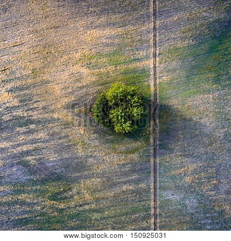 Aerial view over agricultural beveled fields, road and tree. Outdoor. Conceptual landscape photograph taken from the copter.