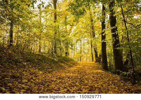 The path in the autumn forest strewn with yellow leaves on a sunny day