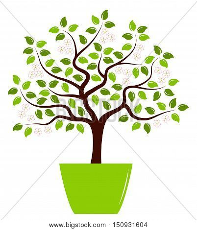 vector flowering tree in pot isolated on white background