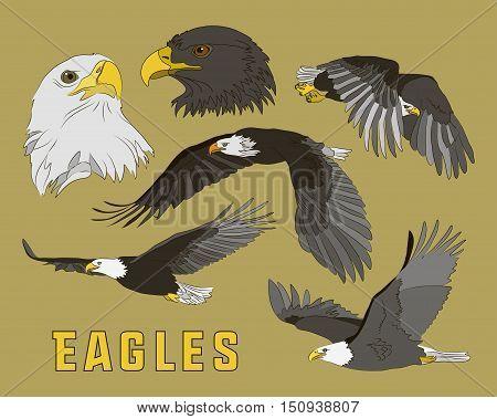 Set of eagles. Flying eagle. Vector illustration EPS 10