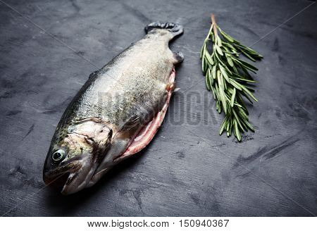 Raw fresh gutted rainbow trout with sprig of rosemary. Preparation for cooking delicious fish on dark background. Saturated color, place for text