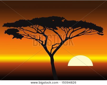 african sunset background.vector illustration