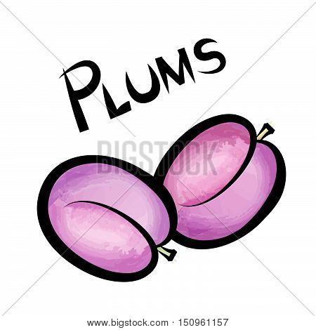 Pulms isolated. Plum fruit label design. Hand drawn watercolor berry set. Vector illustration  with lettering