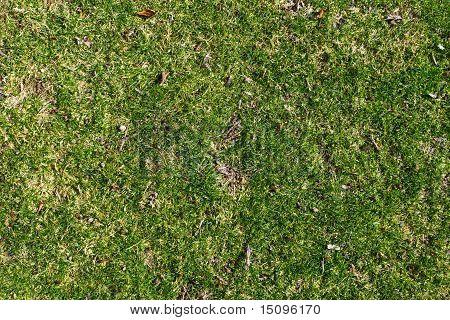 Careless grass texture
