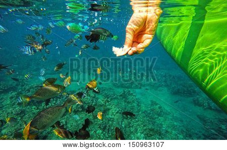 Coral Wildlife in Bali Indonesia underwater colorful fish