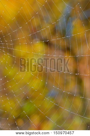 Web closeup on the meadow forest