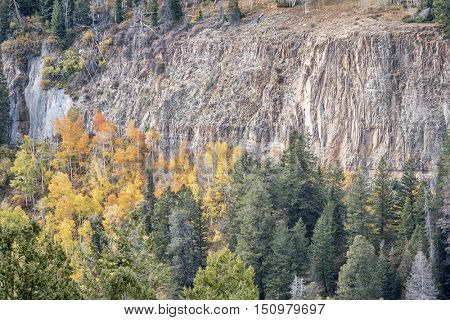 sandstone cliff and aspen grove in fall colors - overlook of Deep Creek Canyon near Dotsero in Rocky Mountains, Colorado