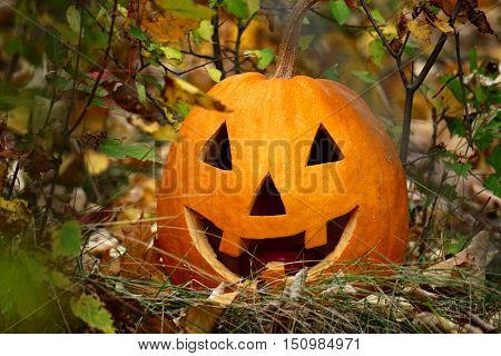 Halloween pumpkin on fallen autumn leaves with a smile on his face.