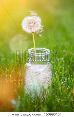 Dandelion seed wishes, saved in a bottle. Shallow focus on floating seed and stem