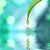 pic of environmental protection  - green leaf with water drop water on blue sunny background - JPG