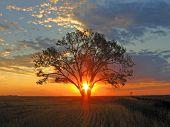 Постер, плакат: Восход солнца светит через дерево