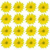 Yellow Daisy Wallpaper