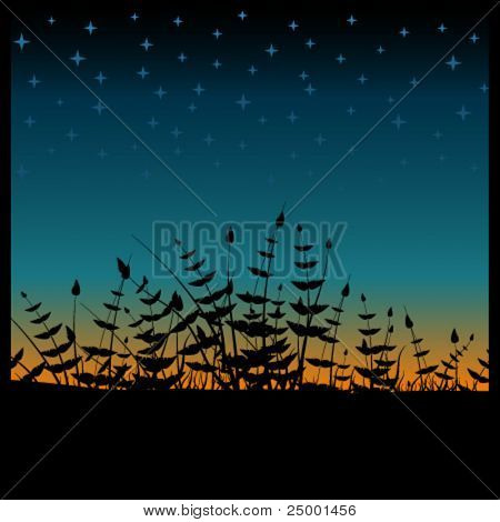 Vector sunset with plants