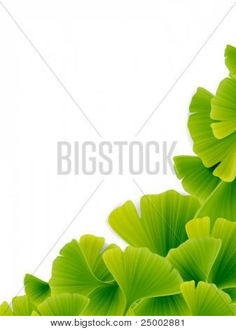Vector Green Ginko Leaves